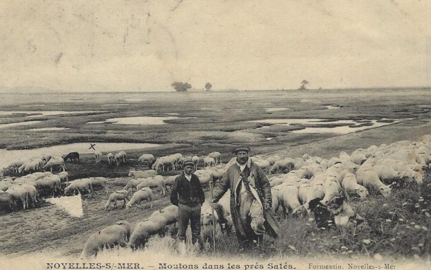 moutons noyelles 2